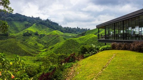 When you're sick of the city: Cameron Highlands beckons