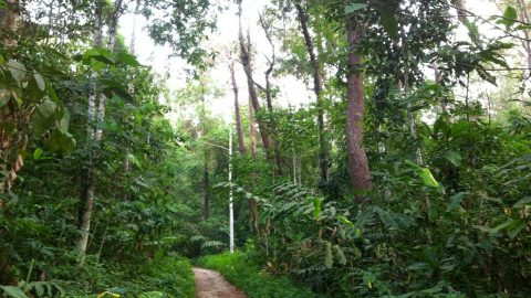 5 best hikes in KL